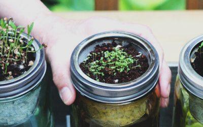Cómo cultivar en casa verduras y hortalizas de manera sostenible