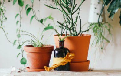 5 ventajas de usar macetas de barro