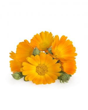 semillas-ecologicas-tomate-muchamiel