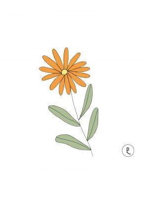semillas-organicas-calendula-purplant