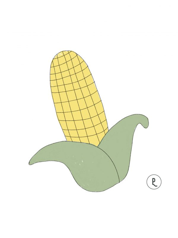 semillas-organicas-maiz