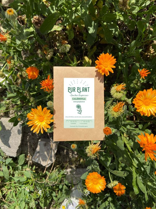 semillas-purplant-calendula