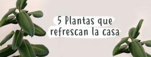 5-plantas-refrescan-casa