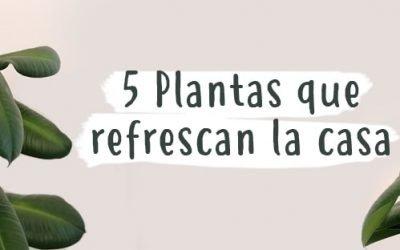 5 plantas para refrescar la casa