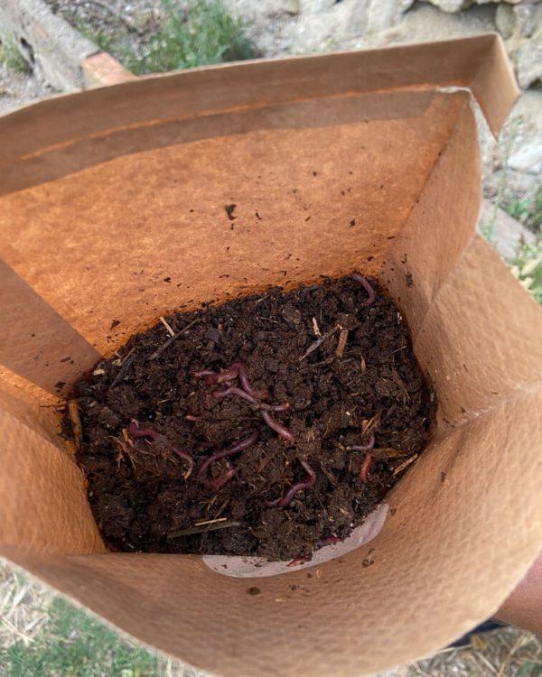 lombrices-rojas-californianas-paquete