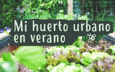 Qué plantar este verano en mi huerto urbano