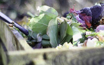 8 consejos para cuidar tu compost o vermicompost