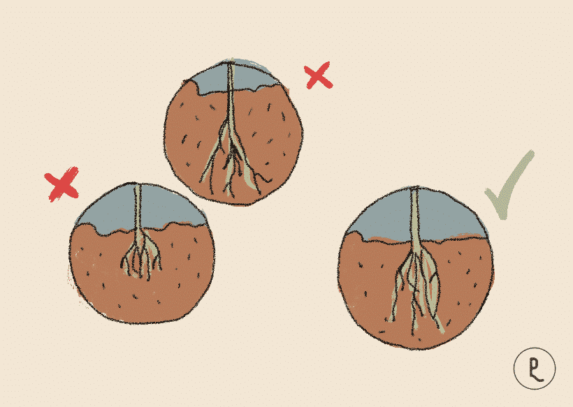 no plantas muy profundo