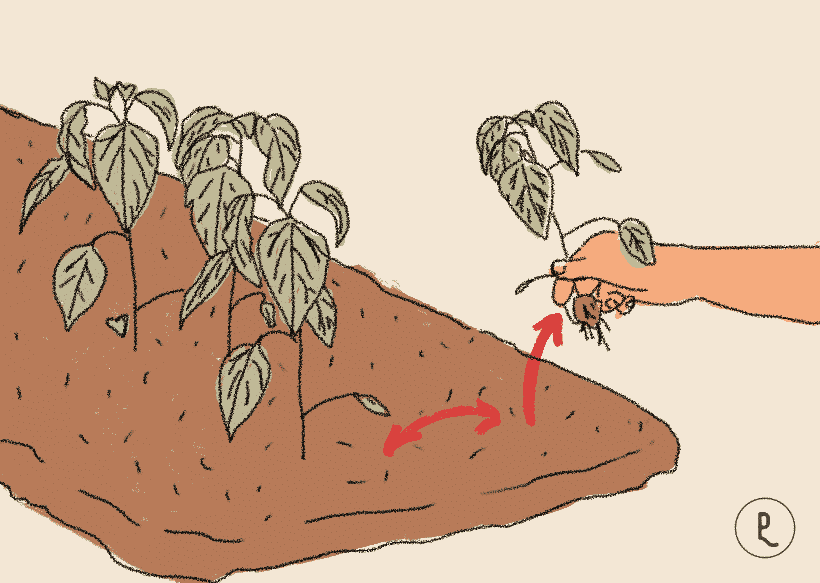 mover las plantas