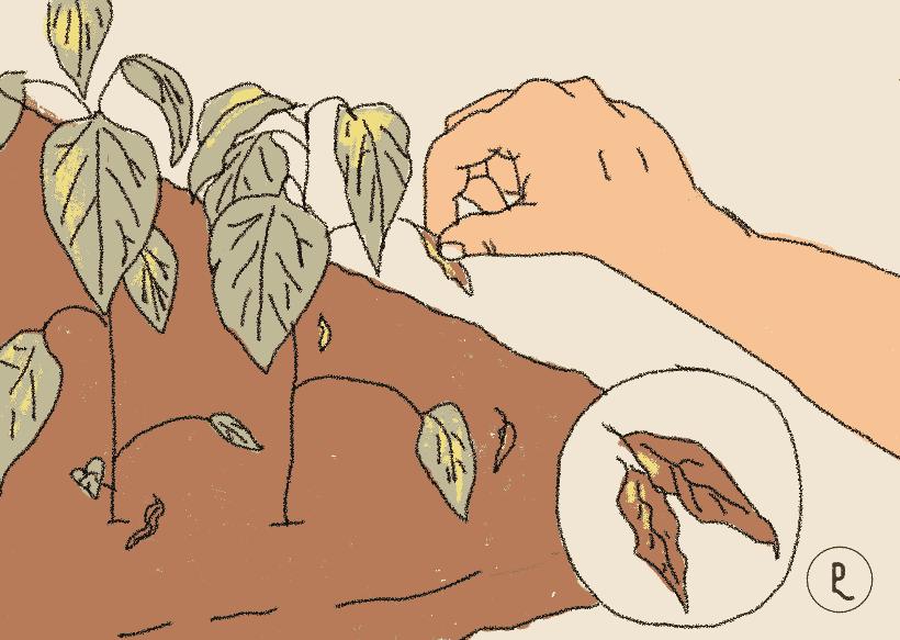 quitar hojas muertas
