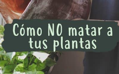 Cómo no matar a tus plantas – Cuidados para tus plantas de interior y exterior