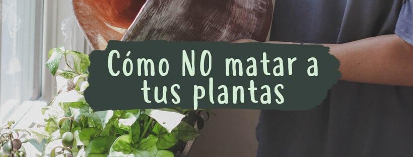 como-no-matar-plantas