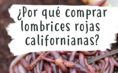 ¿Por qué comprar lombrices rojas californianas?