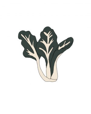 semillas-ecologicas-acelga