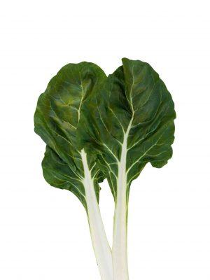 semillas-organicas-acelga-eslida