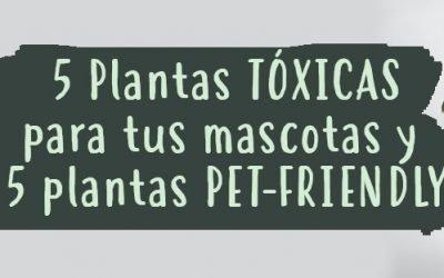 5 plantas tóxicas para tus mascotas y 5 plantas pet-friendly