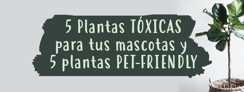 5plantas-toxicas-para-masctoas-5-plantas-petfriendly