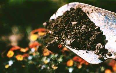 La importancia de abonar en otoño