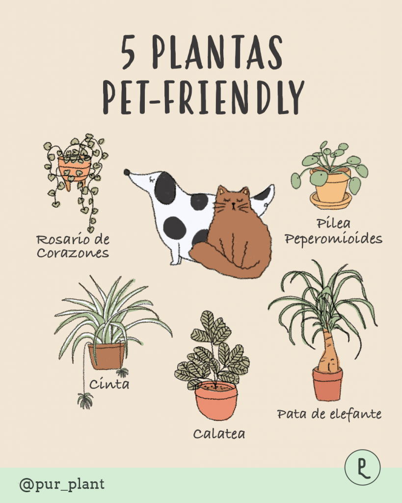 plantas-pet-friendly