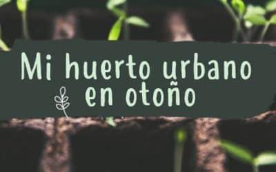 Qué plantar este otoño en mi huerto urbano