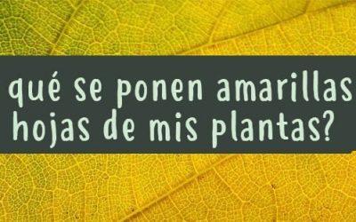 Tus plantas te hablan. ¿Por qué se ponen amarillas las hojas de mis plantas?. Carencias y síntomas