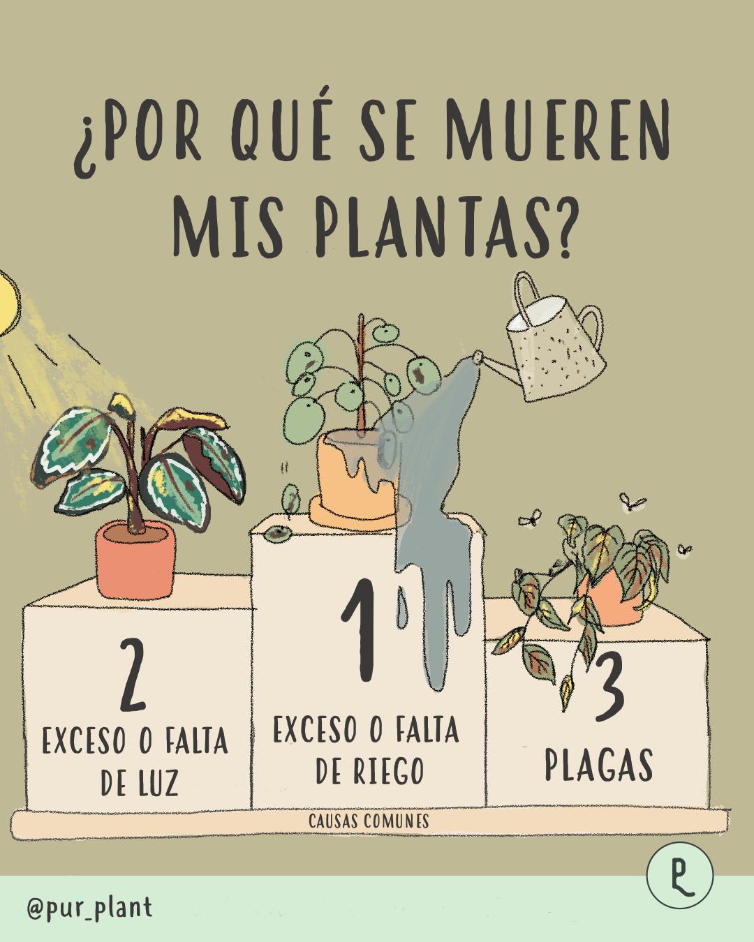 por-que-se-mueren-mis-plantas