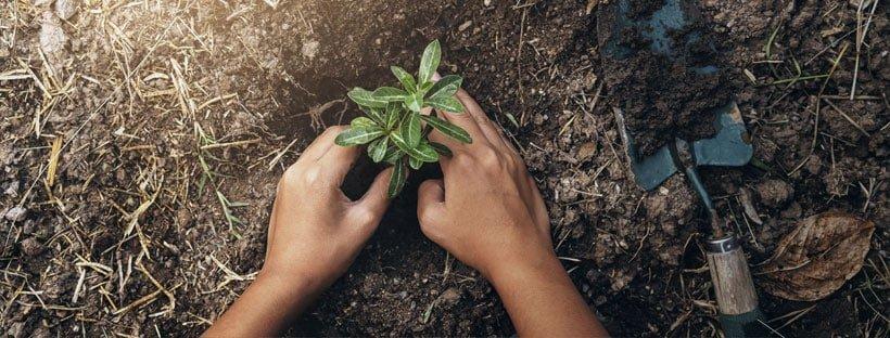 importancia-cuidar-suelo