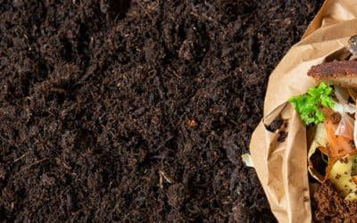 Los Mejores Abonos Orgánicos para plantas
