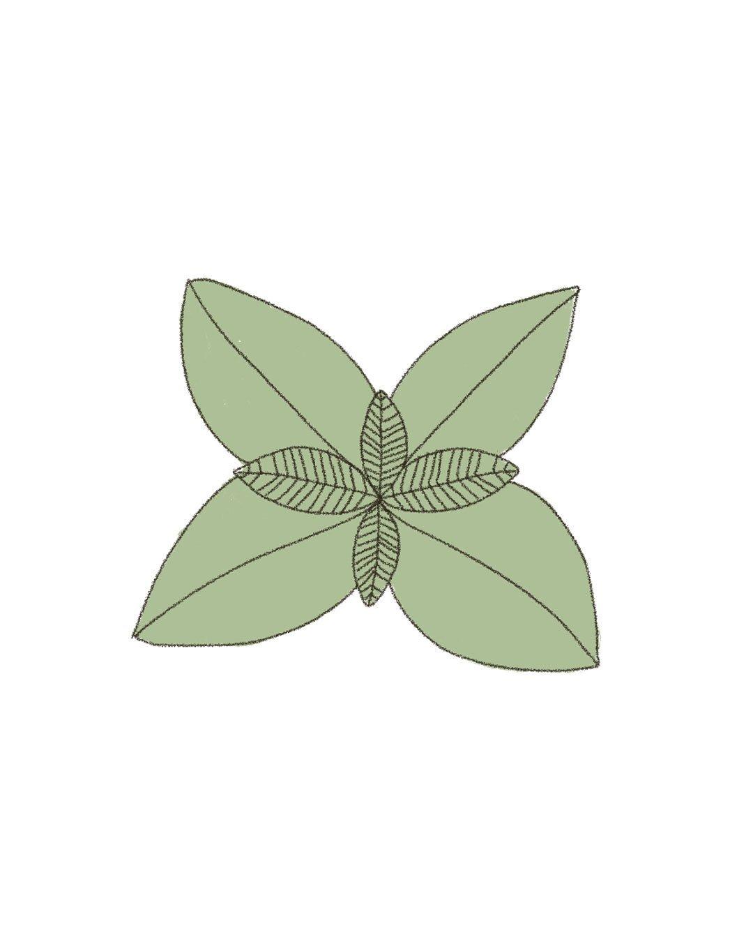 Semillas orgánicas – Albahaca Genovesa