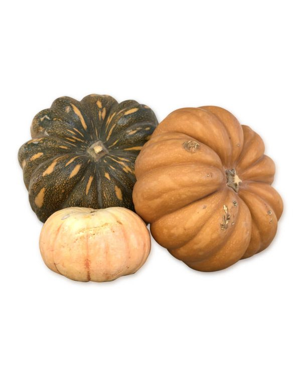 calabaza-halloween-fruto-purplant