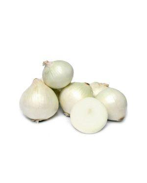 cebolla-branca-de-lisboa-purplant