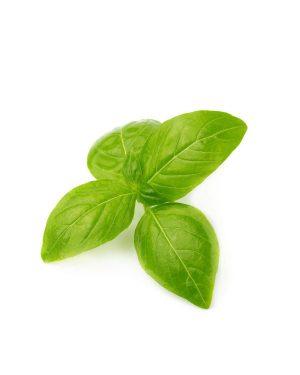 hoja-albahaca-genovesa-purplant