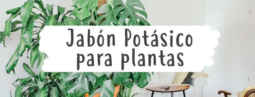 jabon-potasico-para-plantas