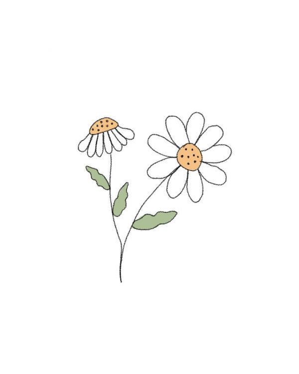 margarita-flor-purplant
