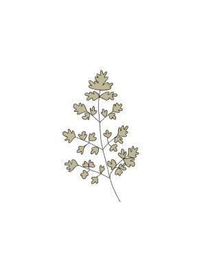 Semillas Orgánicas - Perejil Gigante de Italia
