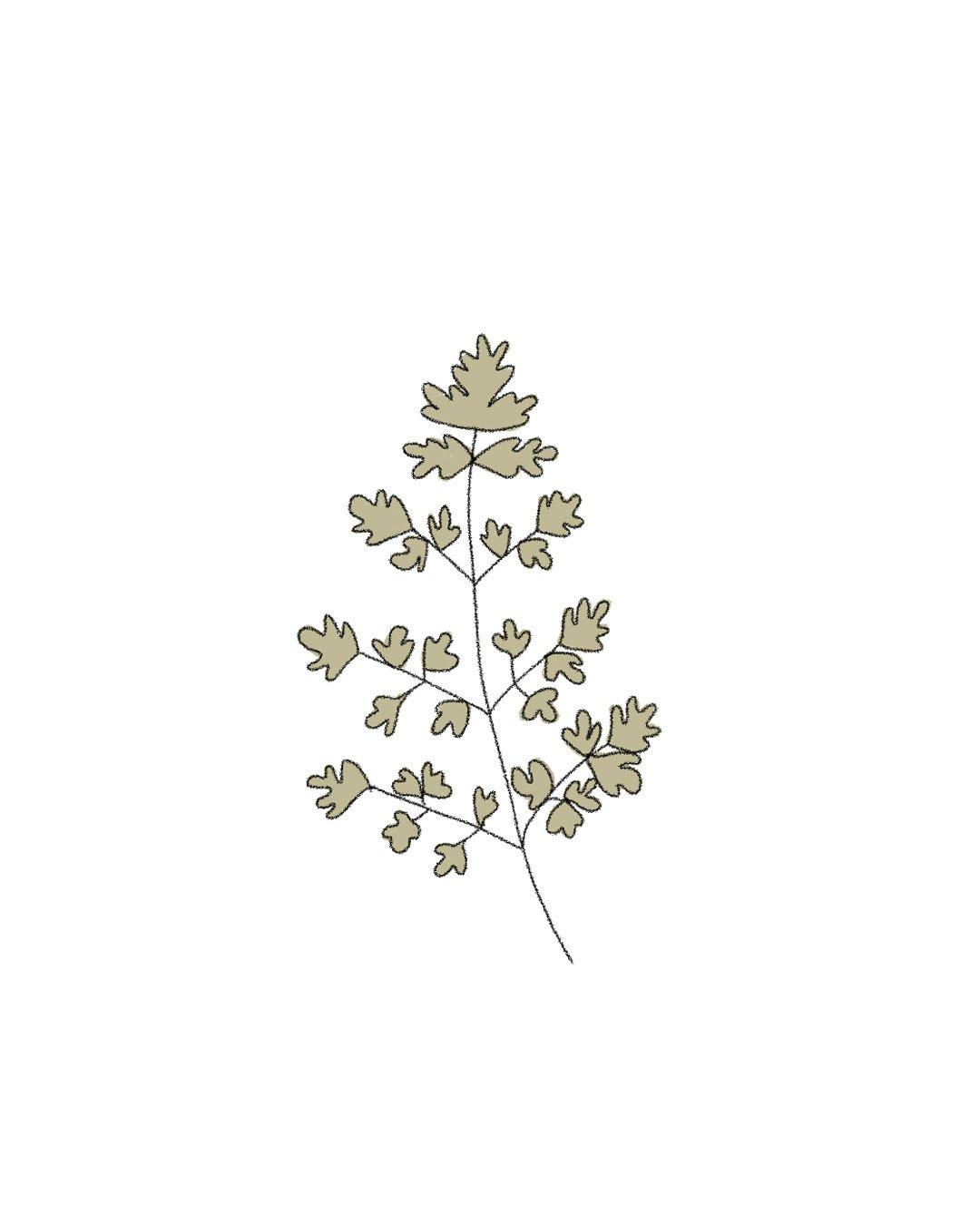 Semillas Orgánicas – Perejil Gigante de Italia