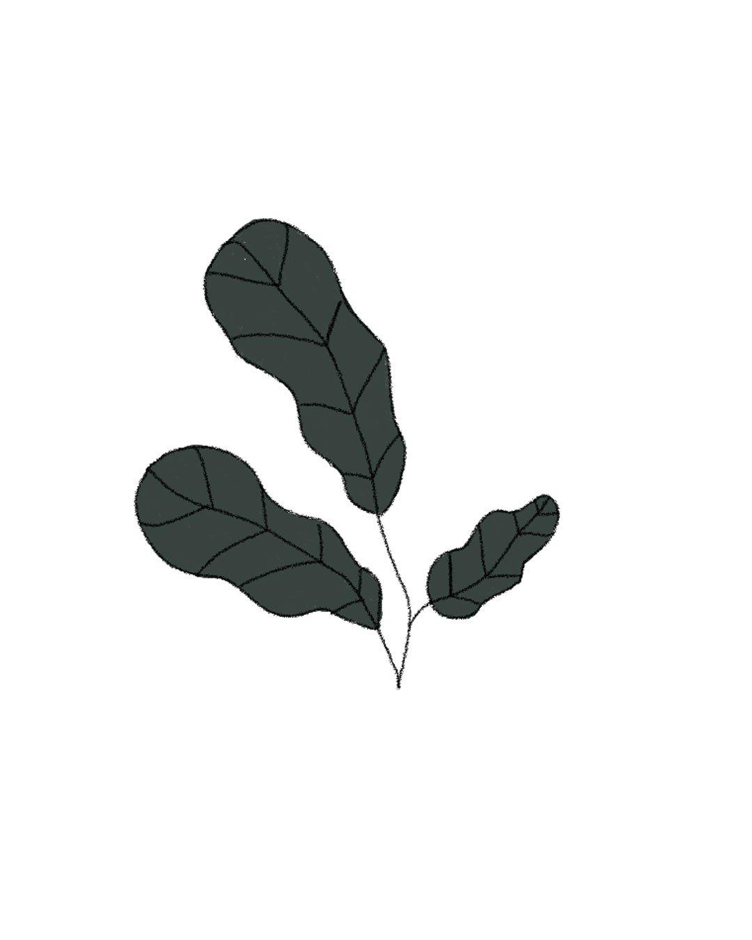 Semillas Orgánicas – Espinaca Butterflay
