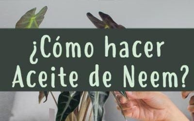 Cómo hacer Aceite de Neem