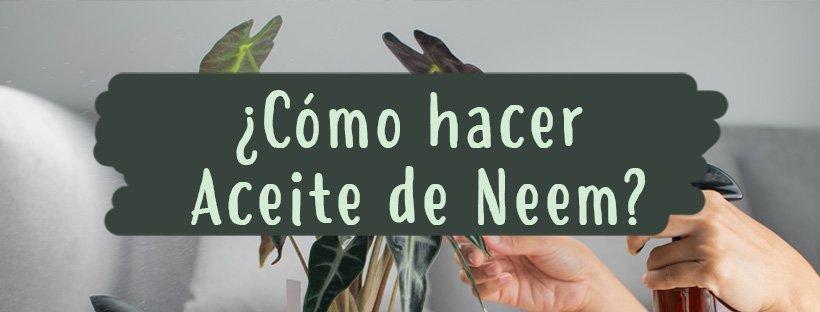 como-hacer-aceite-neem