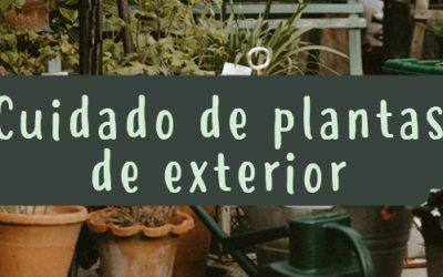 Cuidados para tus plantas de exterior
