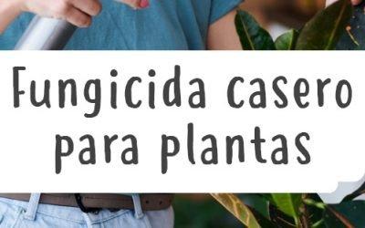 Fungicida casero para plantas