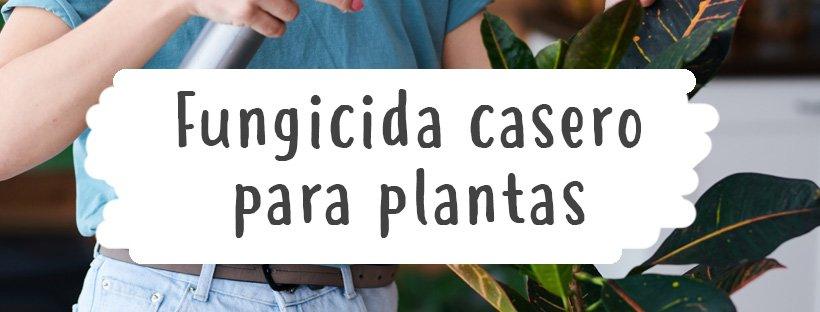 fungicida-casero-para-plantas