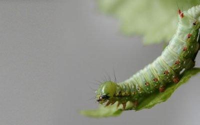 Insecticida casero para plantas