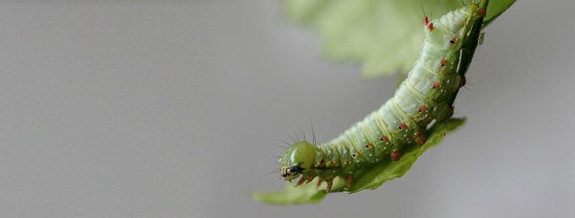 insecticida-natural-casero