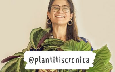 Las plantas de interior imprescindibles para Clara