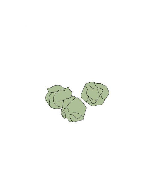 semillas-ecologicas-col-bruselas