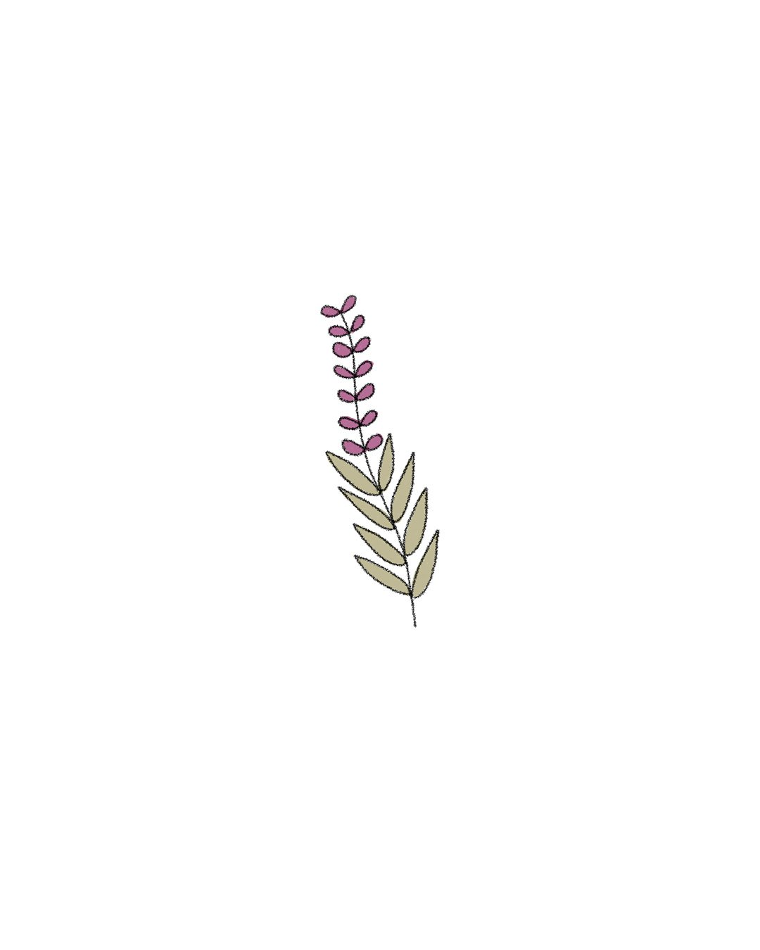 Semillas Orgánicas – Salvia