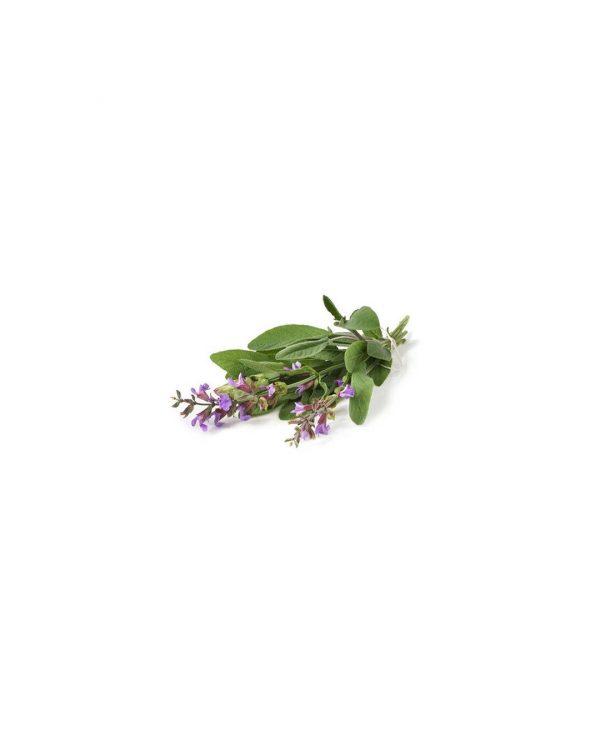 semillas-salvia-purplant