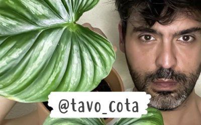 Tavo Cota y sus MUST en plantas de interior 0 (0)