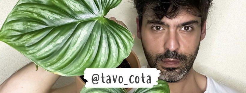 Tavo Cota y sus MUST en plantas de interior